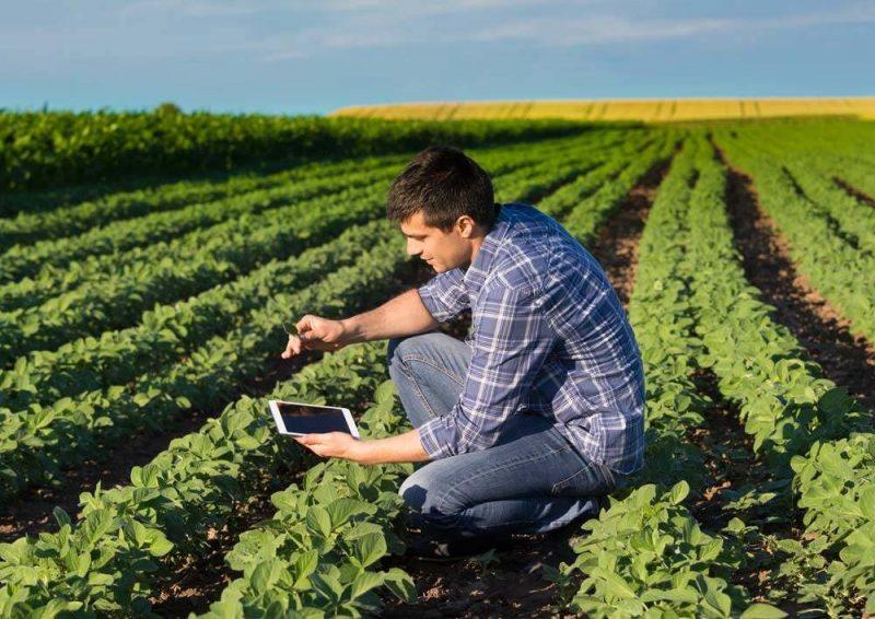 Agronomist In Soybean Field