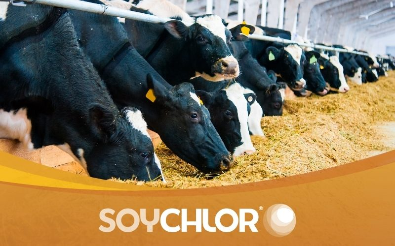 Landus 6245 Dairy Herd 800x500 Soy Chlor May Native V1 201905 mtime20190403145643
