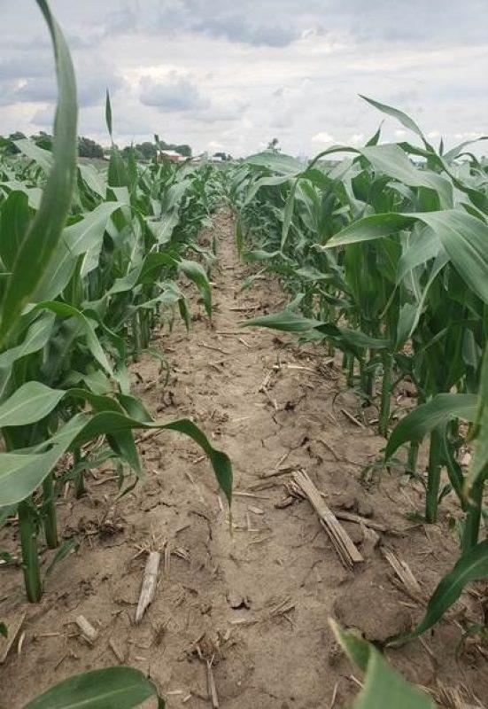 Corn 062419