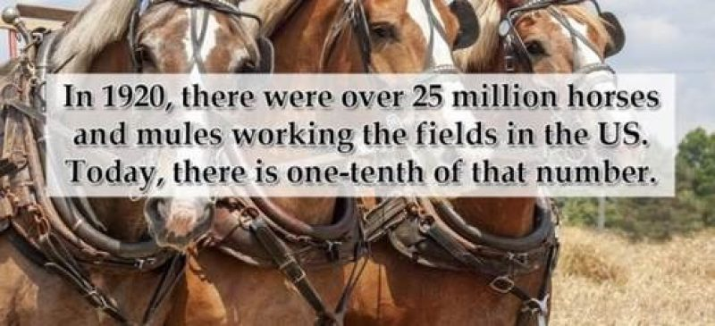 Horses working comments 03102020