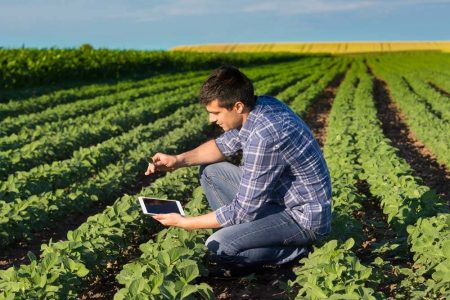 Agronomist In Soybean Field