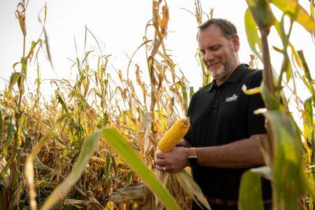 Carstens corn field