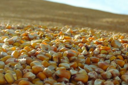 Corn For Grain Advisors Invite