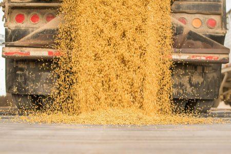 Corp Soybeanharvesttruckdumpingbeans 101316 Vf