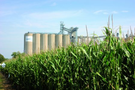 Grain Cornfield Wlandus Cooperative 2016