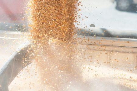 Grain Lol Corn Free To Use