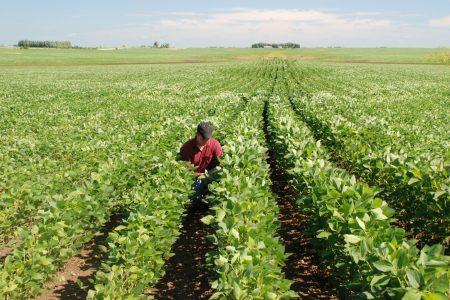 Intern Agronomist in field modified
