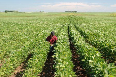 Intern Agronomist in field