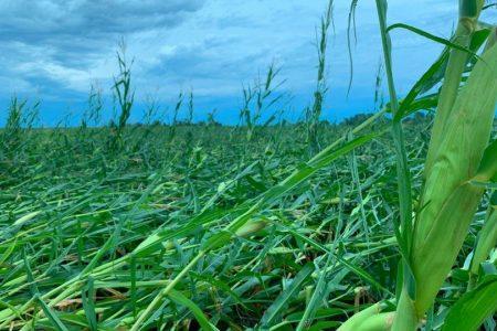 Iowa Damage flat corn 8 10 20
