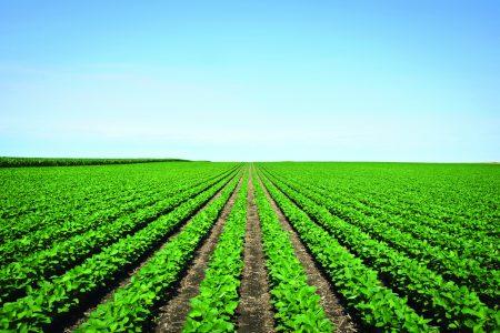 Soybean Field Istock 000020962744Xlarge