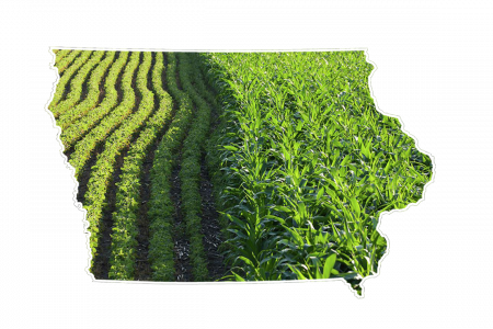 State of Iowa corn and soybeans 1