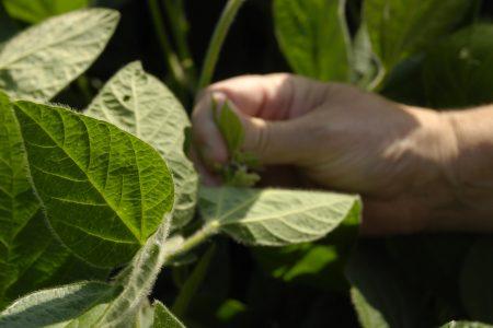 Sustainability Soybean Examination