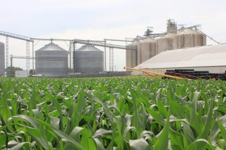 Corn with location behind