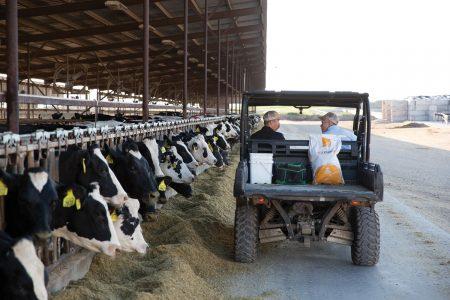 Dairy farm soy plus product