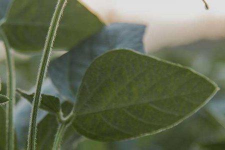 Close up of plant leaf