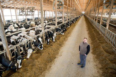 Sunnyside Farms dairy cows