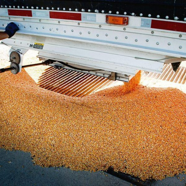 Dumping Grain 1024X685