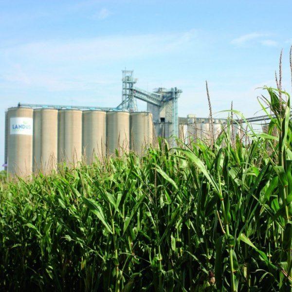 Grain Cornfield Wlandus Cooperative 2016 1024X683