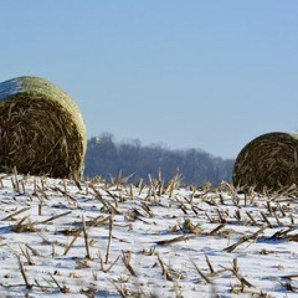 Winter Bales